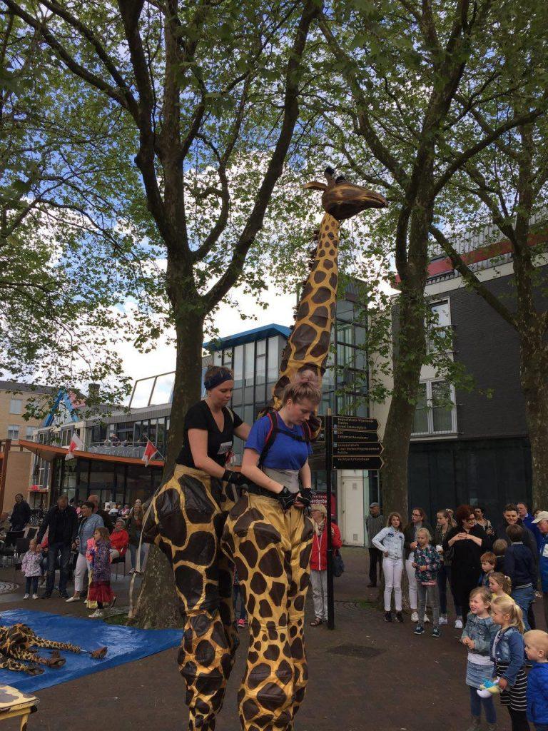 Giraffen in centrum van Hardenberg