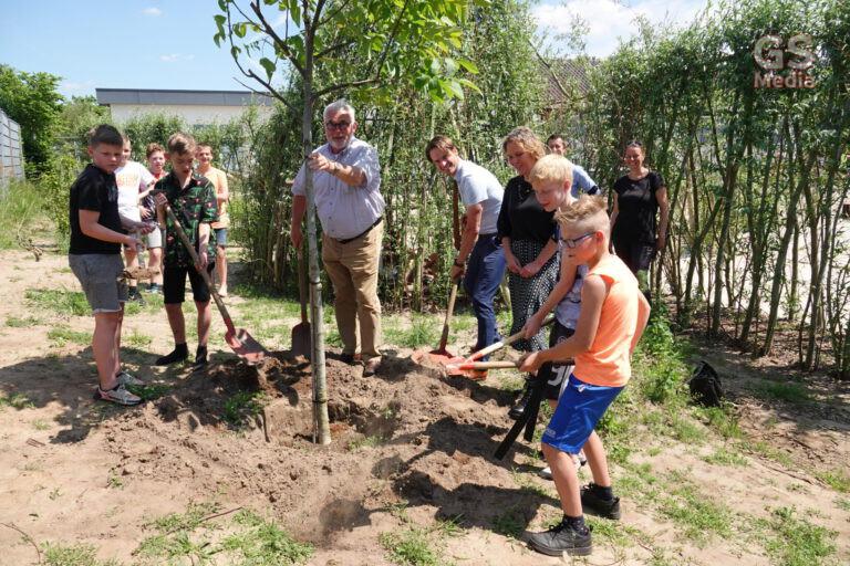 CBS De Akker uit Gramsbergen heeft de walnotenboom eerlijk verdiend